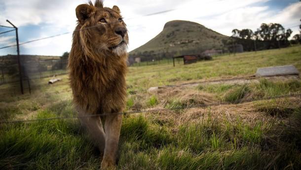 Der abgesetzte König der Tiere