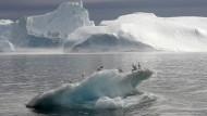Grönlands Eis schmilzt