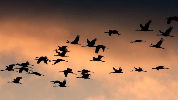 Zugvögel in Brandenburg