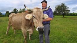 Kuh überlebt fünf Tage in Stollen