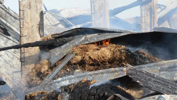 86 Kamele verbrennen im Schwarzwald