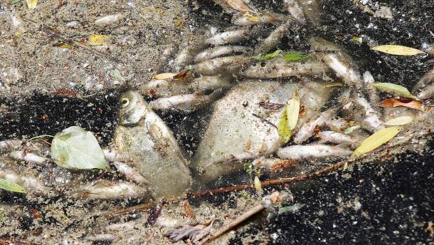 Hitze führt zu großem Fischsterben