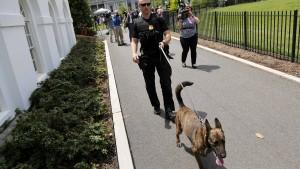 Bomben-Spürhunde durchsuchen Weißes Haus
