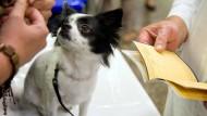Einmal im Monat verwandelt sich die B-Ebene in Frankfurt in eine Tierarztpraxis für Bedürftige.