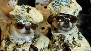 Mit Hunden lässt sich haufenweise Geld verdienen
