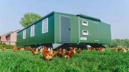Ställe für glückliche Hühner