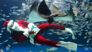 Manche Unternehmen spielen regelrecht den Weihnachtsmann und schenken aussichtsreichen Studenten mal eben eine teure Reise.