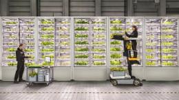 Warum die Kräuter nun im Supermarkt wachsen
