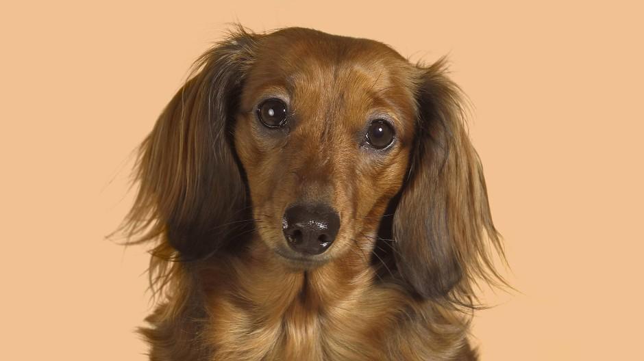 Was bedeutet dieser Blick? Hundepsychologen können helfen.