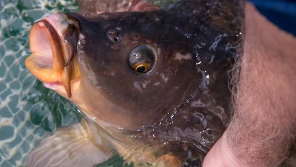 Fischzucht in Trostadt
