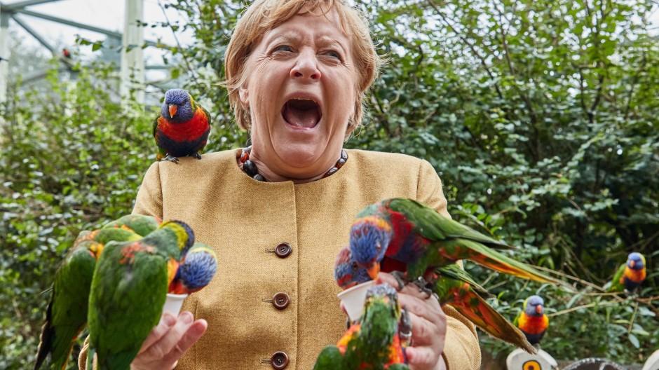 """""""Sie wurde gebissen"""": Das sagt die Parksprecherin über den Moment, in dem Angela Merkel aufschreit."""