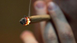 Kalifornien stimmt für Marihuana-Legalisierung
