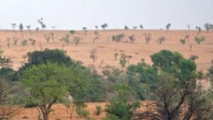 Pionierarbeit mit Ziege in der Wüste