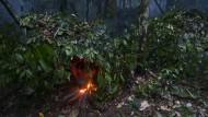 Baka auf der Jagd im Südosten Kameruns – Pfeil und Bogen oder Schlingen dürfen sie vielerorts nicht mehr verwenden.
