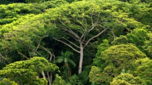 Milliarden-Geschenk für die Regenwälder