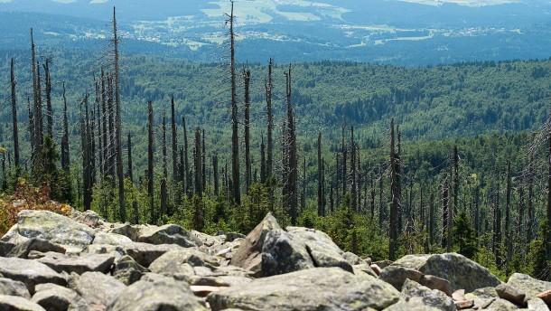 Wo der Wald Wald sein darf