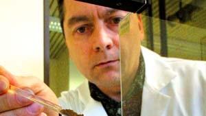 Wissenschaftler: Keine Strahlenbelastung