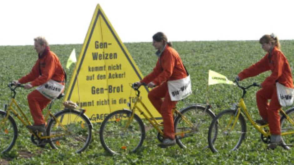 Aktivisten von Greenpeace radeln über ein Feld, auf dem Gen-Weizen angebaut werden soll.