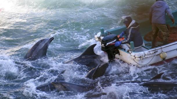 Abe verteidigt Treibjagd auf Delfine