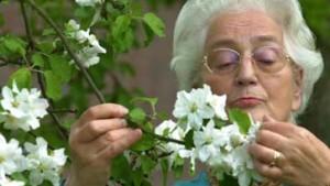 Parlamentarier will Mallorca-Rentnern helfen