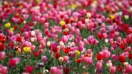 Bunte Boten des Frühlings