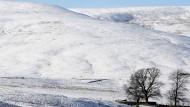 Eskimos haben gar nicht die meisten Wörter für Schnee