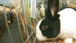 Chinese klont menschliche Zelle mithilfe von Kaninchen-Zellen