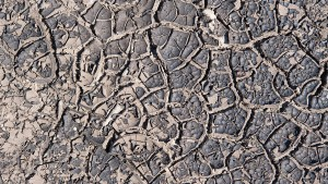"""Die """"Dürre"""" und ihre Profiteure"""
