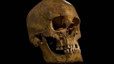 Wurde am Ende wohl mit der Streitaxt eingeschlagen: der Schädel von Richard III.