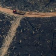 Eine Spur der Verwüstung: Abholzung im brasilianischen Bundesstaat Amazonas.