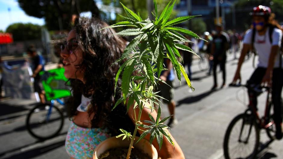 Eine Frau trägt Anfang März eine Marihuana-Pflanze durch Mexiko-Stadt.