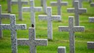 Politiker schätzen die Lage falsch ein und Menschen sterben: 17 Millionen Menschen starben im Ersten Weltkrieg
