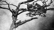 Von der Schlacht um Tsigntao gibt es wenige Abbildungen. Dieses gestellte Foto zeigt angeblich britische Scharfschützen auf einem Baum in der Bucht der Stadt