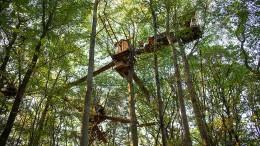 Innenminister ruft zum freiwilligen Verlassen der Baumhäuser auf