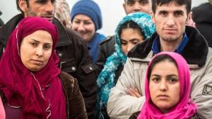 Teure Afghanen