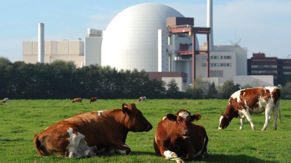 Atomkraft mache gutes Klima, sagen manche. Hier ein Beispiel auf einer Wiese bei Brokdorf.