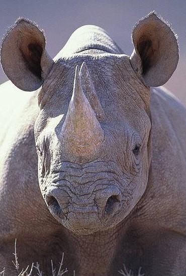 Kunst muss weh tun: Erschießen Sie das Nashorn!