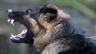 Auf dem Hundesportplatz im bayerischen Sailauf werden Polizeihunde zu Schutz- oder Rauschgiftsuchhunden ausgebildet