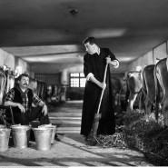 Lieblingsfeinde, Lieblingsitaliener: Don Camillo und Peppone - Filmszene von 1952