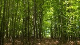Im Wald, da sind die ...