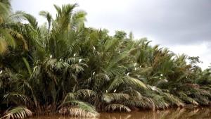 Brunei, der schwerreiche Zwergölstaat auf Borneo, will nun auch zu einem Touristenziel werden. Sein bestes Argument sind seine Regenwälder, die zu den ältesten der Welt zählen. Doch es gibt Hindernisse.
