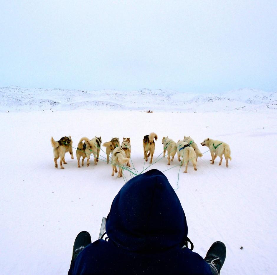 Elf Hunde ziehen drei Menschen. Die Tour mit dem Schlitten ist in Ilulissat Programm.