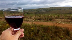 Und plötzlich ein Dreh zu viel: Auf Weinsafari in Südafrika
