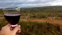 Welcher Wein passt zum Wild? Die beiden touristisch wichtigsten  Momente der Gartenroute in Südafrika vereint.