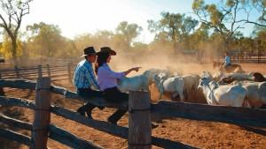 Glut und Rinder