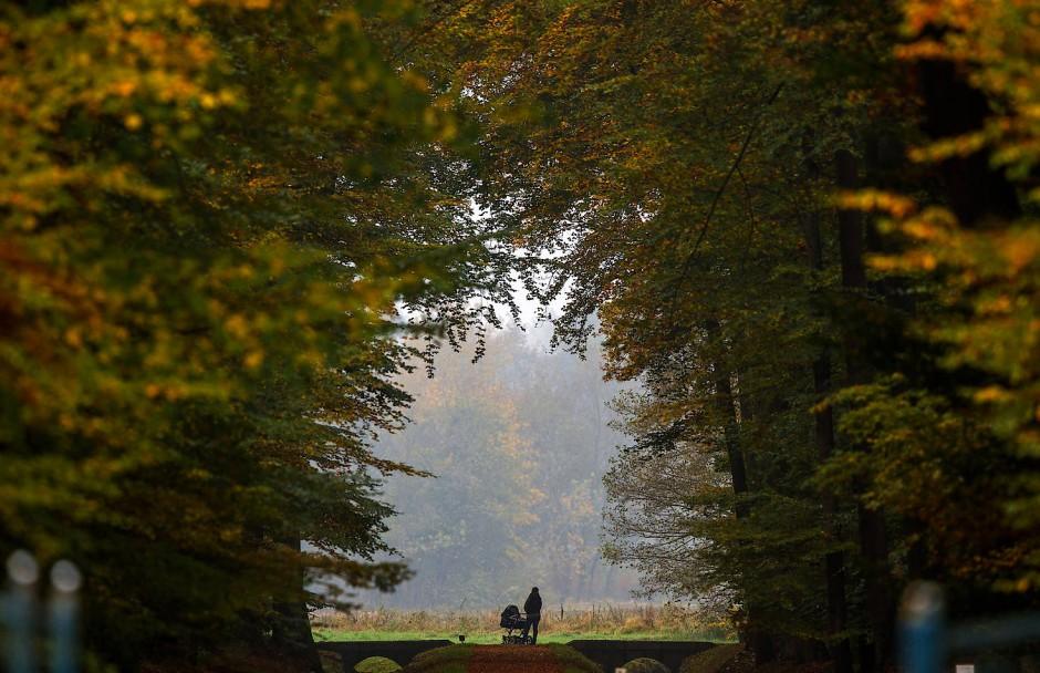 Blickachsen und seltene Bäume: Der Schlosspark wurde zu DDR-Zeiten vernachlässigt.