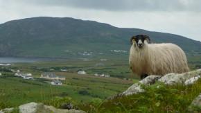 Auch im wildesten, einsamsten Irland ist man nie wirklich allein.
