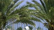 Am Strand von El Arenal