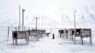 Schlittenhunde, manche auch als Haustier gehalten, warten auf ihre Besitzer. Früher war die Inselgruppe Spitzbergen bekannt für ihre Kohlenminen, heute sollen Tourismus und Forschung aufblühen.