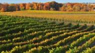 Melancholisch muss man nicht unbedingt werden, wenn der Herbst kommt - besonders dann nicht, wenn er so farbenfroh ist wie in Ontario, und wenn man weiß, dass man sich bald mit dem frisch gekelterten Wein von den Niagara-Fällen trösten kann